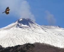 Il cono del Nuovo Cratere di Sud-Est domina la sagoma dell'Etna se visto dal settore orientale del vulcano, come in questa foto scattata da Zafferana Etnea, sul fianco sud-orientale del vulcano, il 17 febbraio 2018. In realtà, il punto più alto dell'Etna è il Cratere di Nord-Est con i suoi 3324 m, che si vede a destra con un pennacchio grigio di cenere vulcanica. L'altezza del Nuovo Cratere di Sud-Est si è attestata, nel 2017, a 3304 m. L'uccello in volo in alto a sinistra è un fringuello. Foto di Boris Behncke